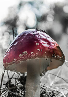 Photograph - Red Toadstool Viewed From Below by Scott Lyons