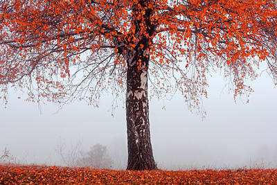 Mountain Royalty-Free and Rights-Managed Images - Red Tree by Evgeni Dinev
