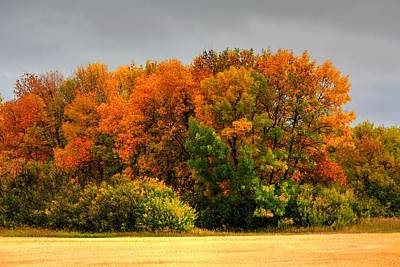 Photograph - Red Trees by David Matthews