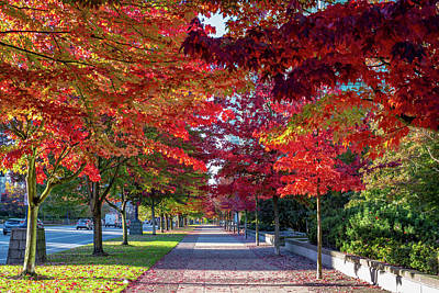 Photograph - Red Trees by Ross G Strachan