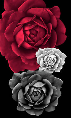 Photograph - Three Roses Abstract by Jennie Marie Schell