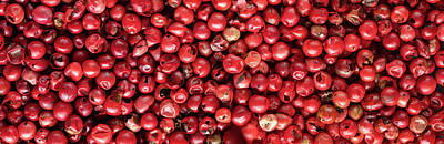 Royalty-Free and Rights-Managed Images - Red Whole Peppercorns Panorama by Steve Gadomski