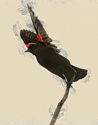 Travel - Red Winged by Ray Congrove