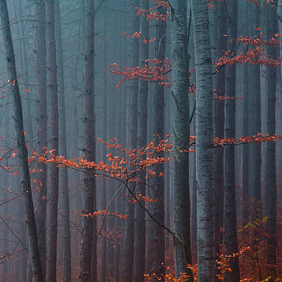 Mountain Royalty-Free and Rights-Managed Images - Red Wood by Evgeni Dinev
