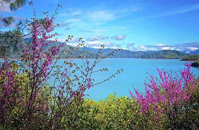 Photograph - Redbud Beauty Along The Shore Of Shasta Lake by Lynn Bauer