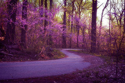 Photograph - Redbud Dream by Dan Urban