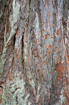 Photograph - Redwood Bark by Mark Duehmig