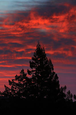Photograph - Redwood Dawn by Kathleen Bishop