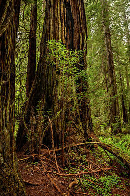 Animal Surreal - Redwood forest 13 by Mike Penney