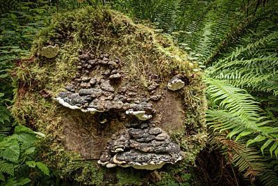 Photograph - Redwood Fungus Face by Stuart Litoff