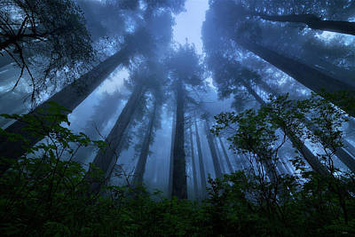 Photograph - Redwood Giants by Greg Norrell