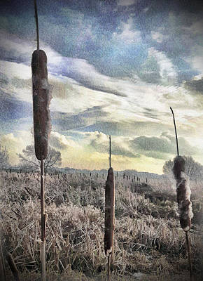 Digital Art - Reed Mace In January by Chris Gill