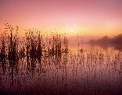 Scenery Photograph - Reeds Reflected In Sweet Bay Pond At by Tim Fitzharris/ Minden Pictures