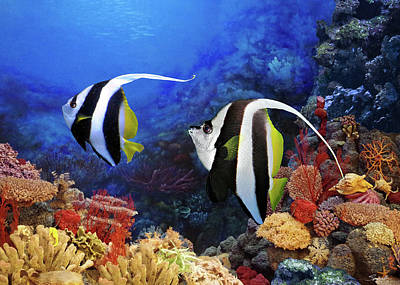 Digital Art - Reef Bannerfish Pair by M Spadecaller