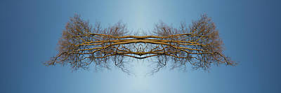 Curated Beach Towels - Reflected trees  by Steve Ball
