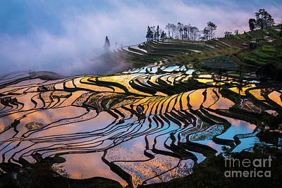 Photograph - Reflecting Terraces by Inge Johnsson