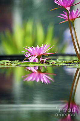 Photograph - Reflecting Water Lily  by Tim Gainey