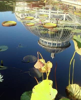 Reflection Photograph - Reflection Of Botanical Garden by Margaret Mendel