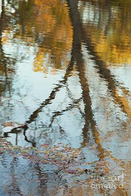 Photograph - Reflection On Lake Murray by Iris Greenwell