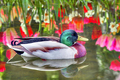 Photograph - Reflections Of Nature by Nadia Sanowar
