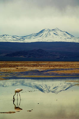 Birds In Snow Wall Art - Photograph - Reflections, Salar De Atacama, Chile by By Philippe Reichert