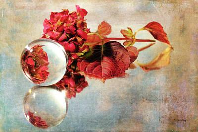 Photograph - Reflective Mood by Randi Grace Nilsberg