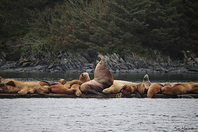 Photograph - Regal Seals by Ron Monsour