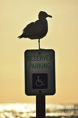 Photograph - Reserved For The Impaired by Skip Willits