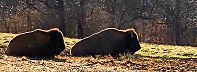 Mixed Media Royalty Free Images - Resting Buffalo Royalty-Free Image by Steve Karol