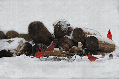 Photograph - Reunion On The Sled In The Snow by Dan Friend