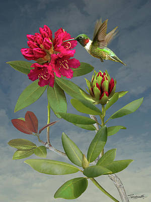 Digital Art - Rhododendron And Hummingbird by M Spadecaller