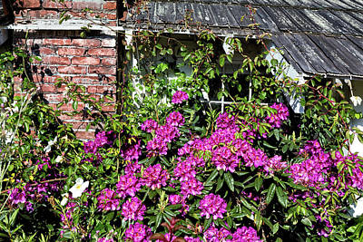 Photograph - Rhododendron Cottage by Kathleen Bishop