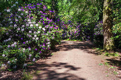 Photograph - Rhododendron Lane In Spring Woods by Jenny Rainbow