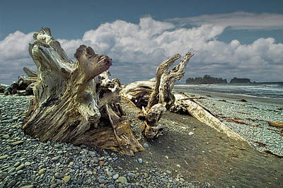 Photograph - Rialto Beach In Olympic National Park In Washington State With Shore Driftwood by Randall Nyhof