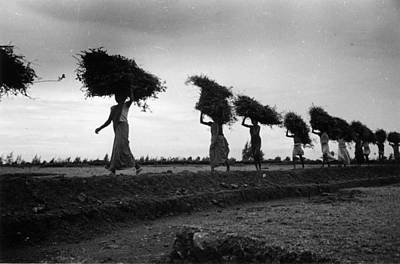 Photograph - Rice Line by Bert Hardy