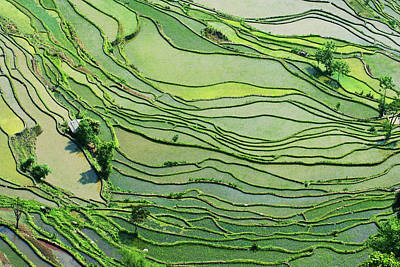 Photograph - Rice Paddy Fields In Southern China by Jialiang Gao
