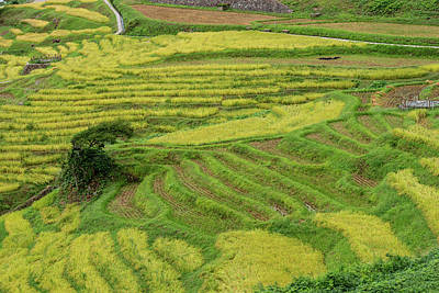 Scenery Photograph - Rice Terraces by I Love Photo And Apple.