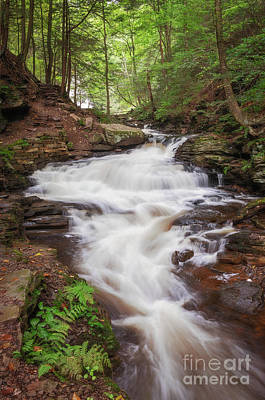 Photograph - Rickett's Glen Waterfall II by Sharon Seaward