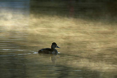 Photograph - Ring-necked Duck In The Mist 1507-011919 by Tam Ryan