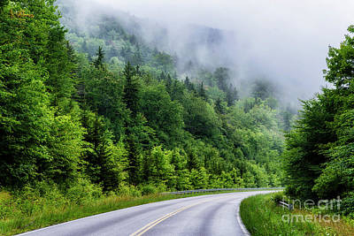 Lady Bug - Rising Mist Highland Scenic Highway by Thomas R Fletcher