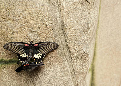 Insect Photograph - Rituals Of Life by Matt.j.harris