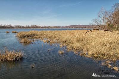 Photograph - River Grass by David Cutts