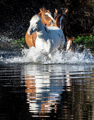 Photograph - River Run 2 by Mary Hone