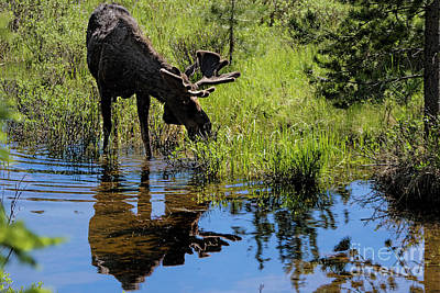 Photograph - River Walk by Jim Garrison