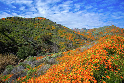 Photograph - Rivers Of Orange Run Through It by Lynn Bauer