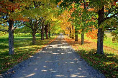 Autumn Photograph - Road Among The Trees 1 by Cworthy