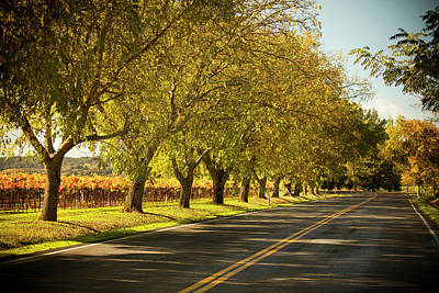 Photograph - Road Lane In Napa Valley, California by Pgiam