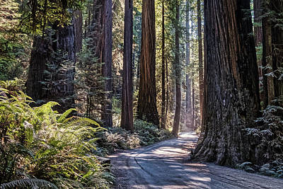 Photograph - Road Through Redwood Park by Stuart Litoff