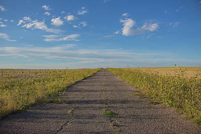Photograph - Road To Nowhere by Traci Asaurus