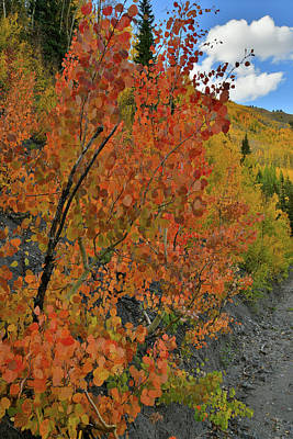 Photograph - Roadside Fall Colors At Red Mountain Pass by Ray Mathis